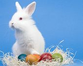 foto of happy easter  - Happy Easter - JPG