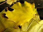 Fall Rainy-sunny Day poster