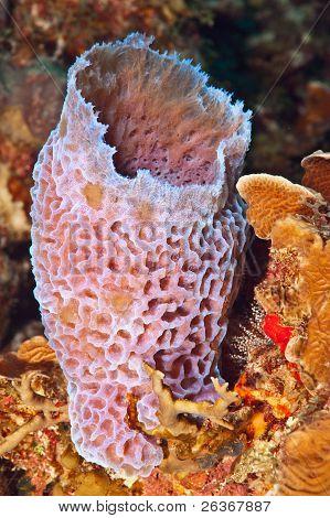 Azure Vase Sponge Poster Id26367887