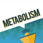 Handwriting Text Metabolism. Concept Meaning Chemical Processes In Body To Produce Energy Food Proce poster