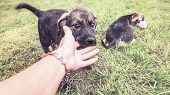 Puppy Playfully Bites Human Fingers On The Lawn, Two Puppies And A Hand poster