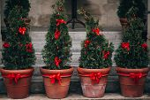 Stylish Christmas Street Decorations, Green Fir Branches With Red Bows On Christmas Trees In Pots  I poster