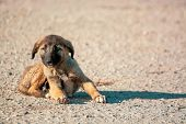 Little, Lovely, Fluffy, Cute Brown Puppy Is Lost And Alone On The Busy Street. Concept Of Abandoned  poster