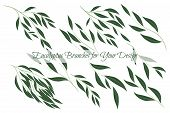 Eucalyptus Branch. Decorative Greenery Of Rustic Wedding. Vector Eucalyptus Leaves Set. Elegant Flor poster