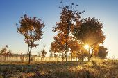 Autumn Nature At Sunrise On Sunny Clear Morning. Yellow Trees On Colorful Meadow In October. Golden poster