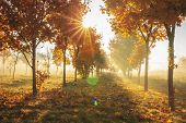 Vivid Autumn Nature With Bright Sunrays. Sunlight In Colorful Autumn Morning. Yellow Trees On Octobe poster