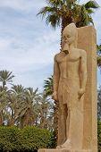 image of ramses  - Standing Statue Of Ramses II In Open Air Museum Of Memphis - JPG