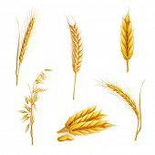 Wheat, vector set