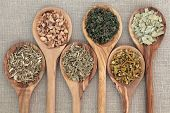 Herb selection for alternative medicine in olive wood spoons over beige background, hyssop, galangal