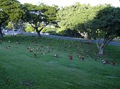 picture of punchbowl  - punchbowl cemetery - JPG