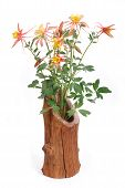 pic of columbine  - Bouquet of yellow flowers Columbine in wooden vase isolated - JPG