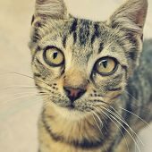 stock photo of curio  - curios cat looking at camera closeup background - JPG