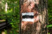 foto of slag  - Sign of slags tourist on the tree in the Kampinos national park  - JPG