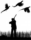 picture of pheasant  - Upland bird pheasants flying while being hunted by a sportsman with a rifle standing in tall field grass pointing skyward - JPG