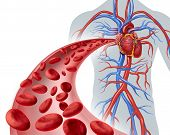 image of cardiology  - Blood heart circulation health symbol with red cells flowing through three dimensional veins from the human circulatory system representing a medical health care icon of cardiology and cardiovascular fitness on a white background - JPG