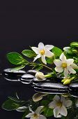 foto of gardenia  - Branch gardenia flower with leaves on pebbles - JPG