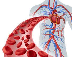 stock photo of microscopic  - Blood heart circulation health symbol with red cells flowing through three dimensional veins from the human circulatory system representing a medical health care icon of cardiology and cardiovascular fitness on a white background - JPG