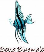 stock photo of fin  - Betta freshwater ray - JPG