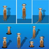 stock photo of meerkats  - Vector meerkat with shadow on a blank background - JPG