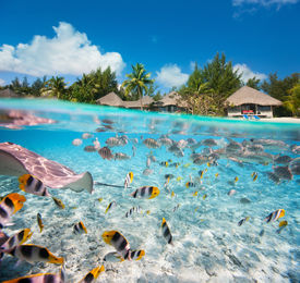 stock photo of french polynesia  - Beautiful tropical island in French Polynesia under and above water - JPG