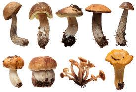 stock photo of chanterelle mushroom  - Wild Foraged Mushroom selection isolated on a white background - JPG