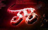 picture of viral infection  - Digital illustration of Ebola virus in   colour - JPG