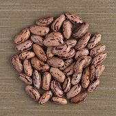 picture of pinto bean  - Top view of circle of pinto beans against green vinyl background - JPG