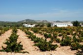 picture of farmhouse  - View across a Spanish vineyard with a farmhouse to the rear Montilla Cordoba Province Andalusia Spain Western Europe - JPG