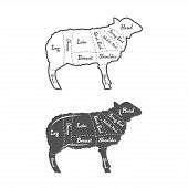 picture of lamb shanks  - Detailed illustration or chart of English Cut of lamb - JPG
