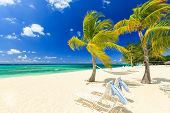picture of sunny beach  - Beach chairs and palm trees at 7 mile beach Grand Cayman - JPG