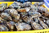 foto of babylonia  - fresh oysters on mediterranean fish market - JPG