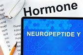 foto of hormones  - Papers with hormones list and tablet  with words  neuropeptide Y - JPG