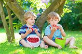 image of little boy  - Two adorable little sibling boys eating fresh organic raspberries from home - JPG