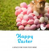 foto of taxidermy  - happy easter against stuffed chick with easter eggs - JPG