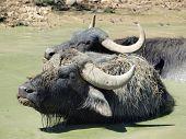 pic of bohemia  - view buffalo bath eastern Bohemia - JPG