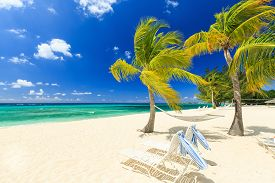 stock photo of atlantic ocean  - Beach chairs and palm trees at 7 mile beach Grand Cayman - JPG