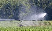 pic of soybeans  - Irragation system watering a farm field of soybeans