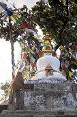 stock photo of buddhist  - Buddhist stupa  - JPG