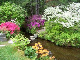 image of azalea  - This showcases the lovely Adticou Azalea Garden in all its springtime splendor as the azaleas are in full bloom - JPG