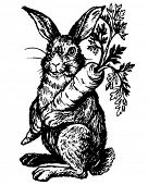image of easter bunnies  - Rabbit Holding Carrot  - JPG