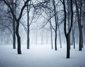 Winter Forest In Fog. Foggy Trees In The Cold Morning poster