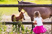 Little Girl Feeding Baby Horse On Ranch poster