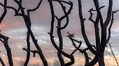 Burnt Black Tree Branches After A Fire In The Forest Sunset Sky Background poster