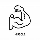 Muscle Icon Isolated On White Background. Muscle Icon Simple Sign. Muscle Icon Trendy And Modern Sym poster