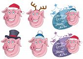 Christmas Pig Isolated On White Background. New Years Holiday. Christmas Pig. Winter Character Head poster