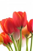 image of flower arrangement  - Bunch of beautiful spring flowers  - JPG