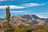 stock photo of superstition mountains  - Saguaro and Mazatzal Mountains in Sonoran Desert - JPG