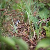 foto of garden snake  - Grass snake  - JPG