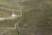 Vineyards In Northern Rhone Valley
