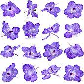 Постер, плакат: Красивый фиолетовый Орхидея бутон задайте макрос Закрыть Up изолированные на белом фоне
